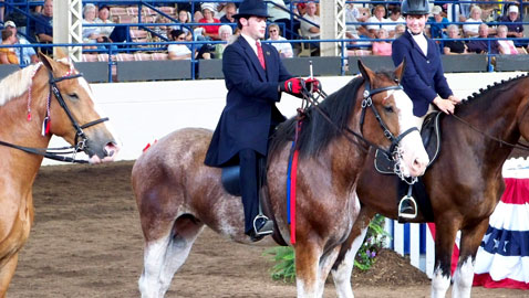 Slideshow Clydesdale photos